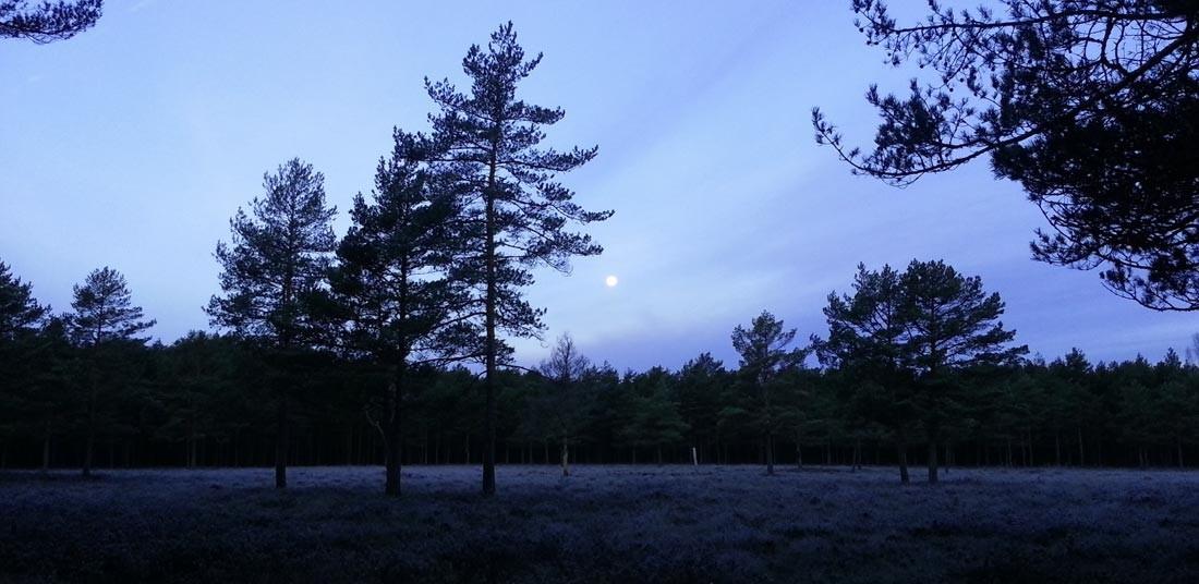 moon1org